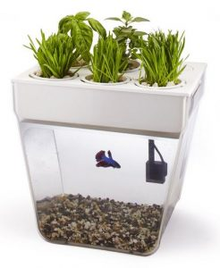 home aquaponics suppliers