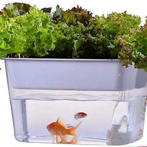 kitchen aquaponics system