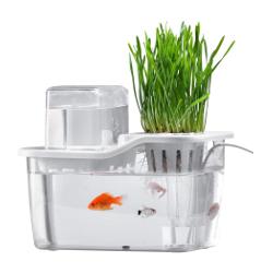 small aquaponics system