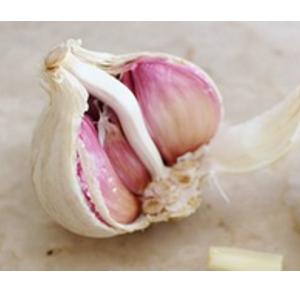best garlic to grow