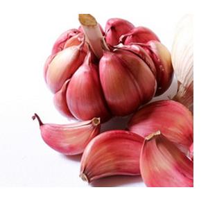 Where to buy garlic seeds