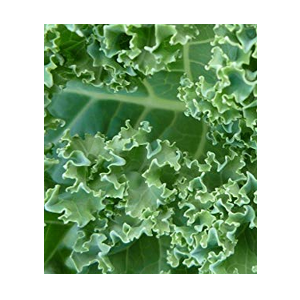 curly kale seeds