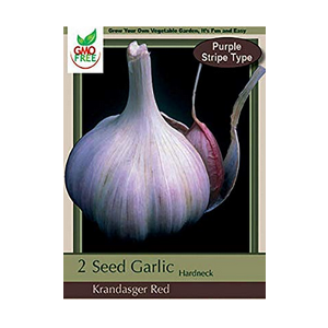 purple stripe garlic
