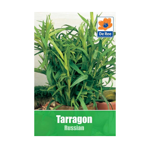 russian tarragon