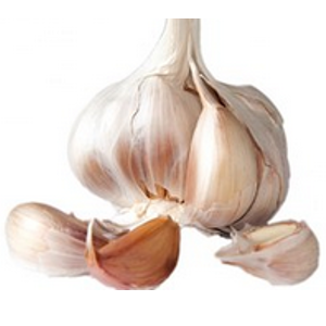 Softneck Garlic