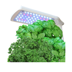 growing herbs hydroponically