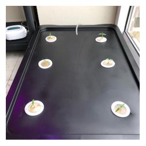 black diy hydroponic system