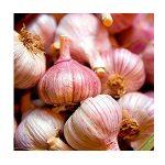 germidour garlic.