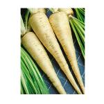 hamburg parsley