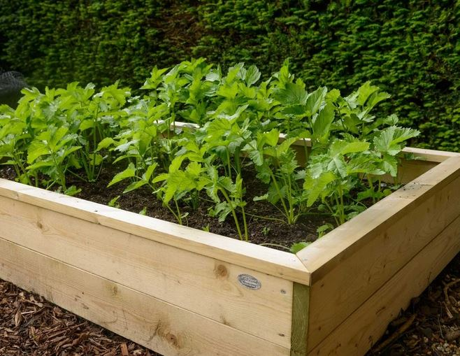 how to grow ingredients outside