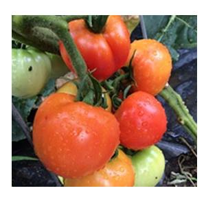 grow veg indoors