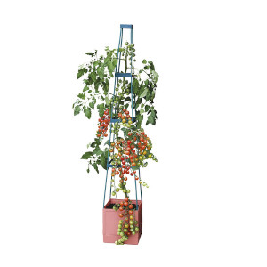 kitchen tomato pot