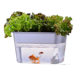 small aquaponics kit