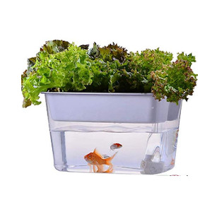 kitchen aquaponic kit