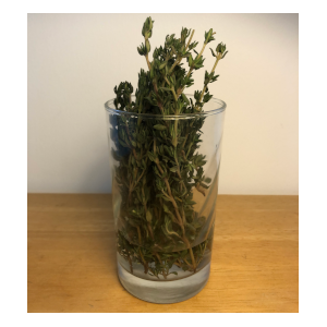 thyme in a glass of water